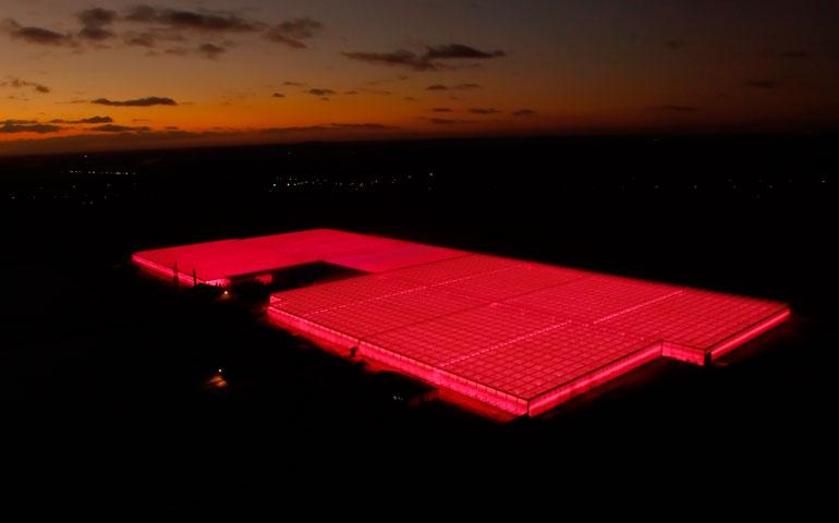 oświetlenie LED Philips w szklarni VegaPOL Budyta